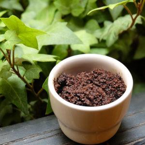 Marc de café pour les plantes